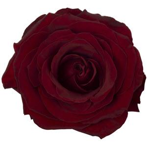 A Black Pearl, Dark Red Rose