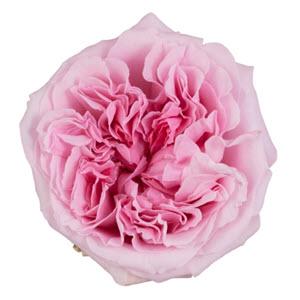 """""""Miranda Light Pink"""""""