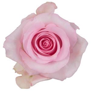 """Nena Light Pink"""