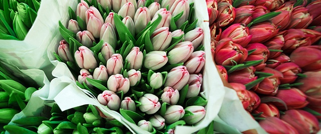 tulips_wrapped